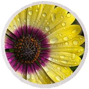 Daisy Up Close  Round Beach Towel