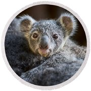 Up Close Koala Joey Round Beach Towel