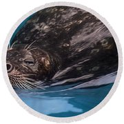 Round Beach Towel featuring the photograph Up For Air by Robin-Lee Vieira