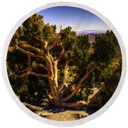 Utah Juniper At High Point Red Rock Canyon Round Beach Towel