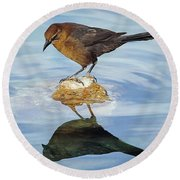 Round Beach Towel featuring the photograph Vanity by Elaine Malott