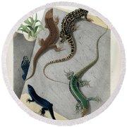 Varieties Of Wall Lizard Round Beach Towel
