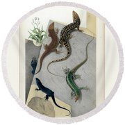 Round Beach Towel featuring the drawing Varieties Of Wall Lizard by Jacques von Bedriaga