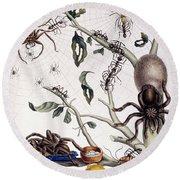 Various Arachnids From South America, 1726  Round Beach Towel