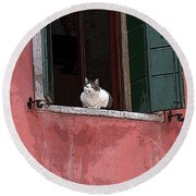 Venetian Cat In Window Round Beach Towel