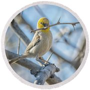 Verdin Collecting Nest Material Round Beach Towel