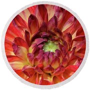 Variegated Dahlia Beauty Round Beach Towel