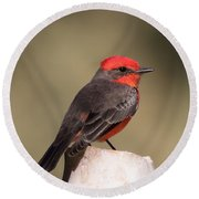 Vermilion Flycatcher In Northern California Round Beach Towel