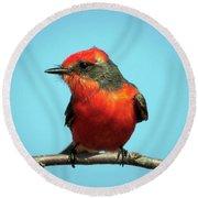 Vermilion Flycatcher - Pyrocephalus Rubinus Round Beach Towel
