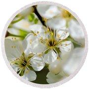 Vermont Apple Blossoms Round Beach Towel