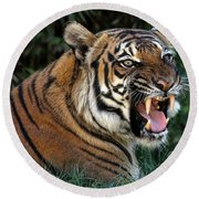 Round Beach Towel featuring the photograph Very Cranky Today by Elaine Malott