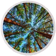 Round Beach Towel featuring the photograph  Veterans Acres Park Pine Grove by Tom Jelen