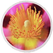 Round Beach Towel featuring the photograph Vibrant Cistus Heart. by Terence Davis
