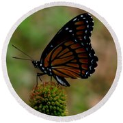 Viceroy Butterfly Round Beach Towel by Donna Brown