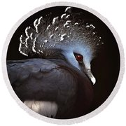 Victoria Crowned Pigeon Round Beach Towel by Elaine Manley
