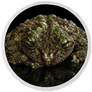 Vietnamese Mossy Frog, Theloderma Corticale Or Tonkin Bug-eyed Frog, Isolated On Black Background Round Beach Towel by Sergey Taran