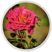 Vignetted  Rose Round Beach Towel by Robert Bales