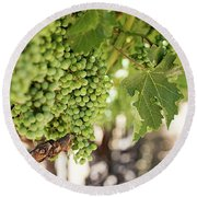 Wine Vineyard Of St. Helena - Grapevine Napa Valley Photography Round Beach Towel