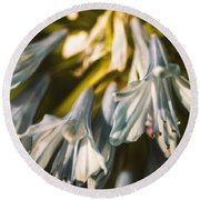 Vintage Agapanthus Flower Round Beach Towel by Jorgo Photography - Wall Art Gallery