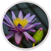 Violet And Yellow Water Lily Flower With Unopened Bud Round Beach Towel