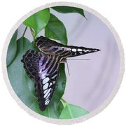 Violet Clipper Butterfly V2 Round Beach Towel