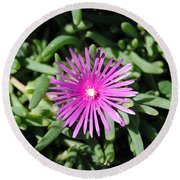 Ice Plant Round Beach Towel