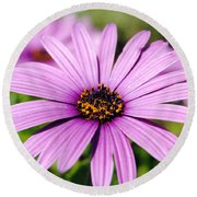 The African Daisy 1 Round Beach Towel