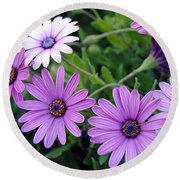 The African Daisy Flowers Round Beach Towel