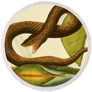 Viper Fusca Round Beach Towel by Mark Catesby