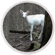 Round Beach Towel featuring the photograph Vision Quest White Deer by LeeAnn McLaneGoetz McLaneGoetzStudioLLCcom