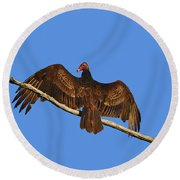 Round Beach Towel featuring the photograph Vivid Vulture .png by Al Powell Photography USA