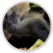 Vulture Round Beach Towel by Martin Newman