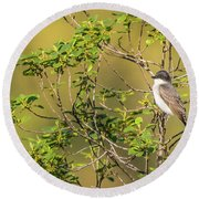 Round Beach Towel featuring the photograph Waiting For A Victim by Onyonet  Photo Studios