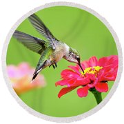 Waiting In The Wings Hummingbird Square Round Beach Towel