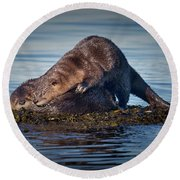 Round Beach Towel featuring the photograph Wake Up by Randy Hall