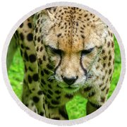 Walking Cheeta Round Beach Towel
