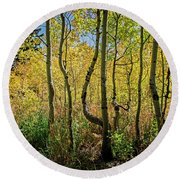Round Beach Towel featuring the photograph Walking In The Woods by Scott Read