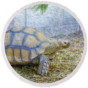 Round Beach Towel featuring the photograph Walking Turtle by Raphael Lopez