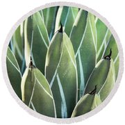 Round Beach Towel featuring the photograph Wall Of Agave  by Saija Lehtonen