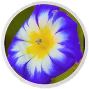 Wallflower Round Beach Towel