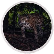 Wandering Jaguar Round Beach Towel by Wade Aiken