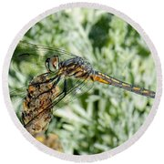 Warming-up - Darner Dragonfly Round Beach Towel