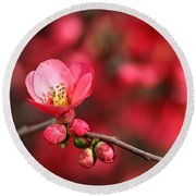 Warmth Of Flowering Quince Round Beach Towel