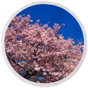Washington Monument & Spring Cherry Round Beach Towel by Panoramic Images