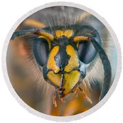 Round Beach Towel featuring the photograph Wasp Portrait by Alexey Kljatov