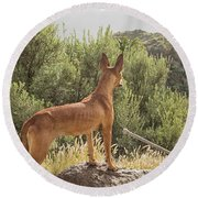 Watchful Dog Round Beach Towel by Patricia Hofmeester