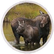 Watchful Moose Round Beach Towel