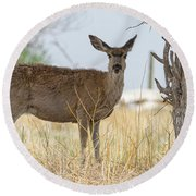 Watching From The Woods Round Beach Towel by James BO Insogna