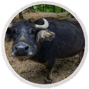 Water Buffalo On Dry Land Round Beach Towel