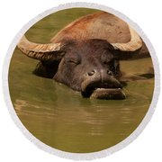 Round Beach Towel featuring the photograph Water Buffalo Sleeping by Chris Flees